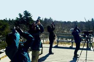 Image shows multiple people standing on a wide wooden deck on a bright sunny day, all are looking up through cameras and binoculars at passing birds. Photo © Skye Haas.