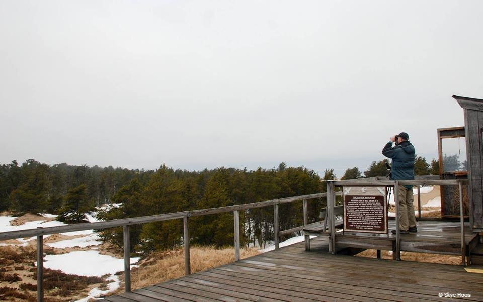 Image shows the hawk deck at WPBO, a wooden structure overlooking the jack pine forest with scattered snowbanks. Photo copyright Skye Haas.