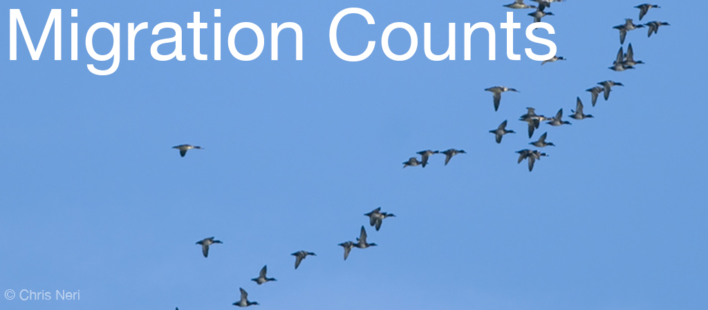 "Image shows a far away photo of migrating Mergansers and Scaup ducks across a clear blue sky at the Whitefish Point Bird Observatory. Image has the text ""Migration Counts"" in white letters in the top left hand corner. WPBO's blogs. Photo copyright Chris Neri."
